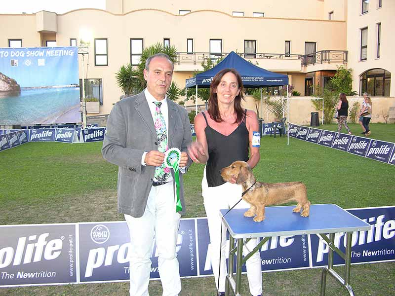 8 Best in show BABY LUX DEL PALATINO JUST LIKE THIS BNPD